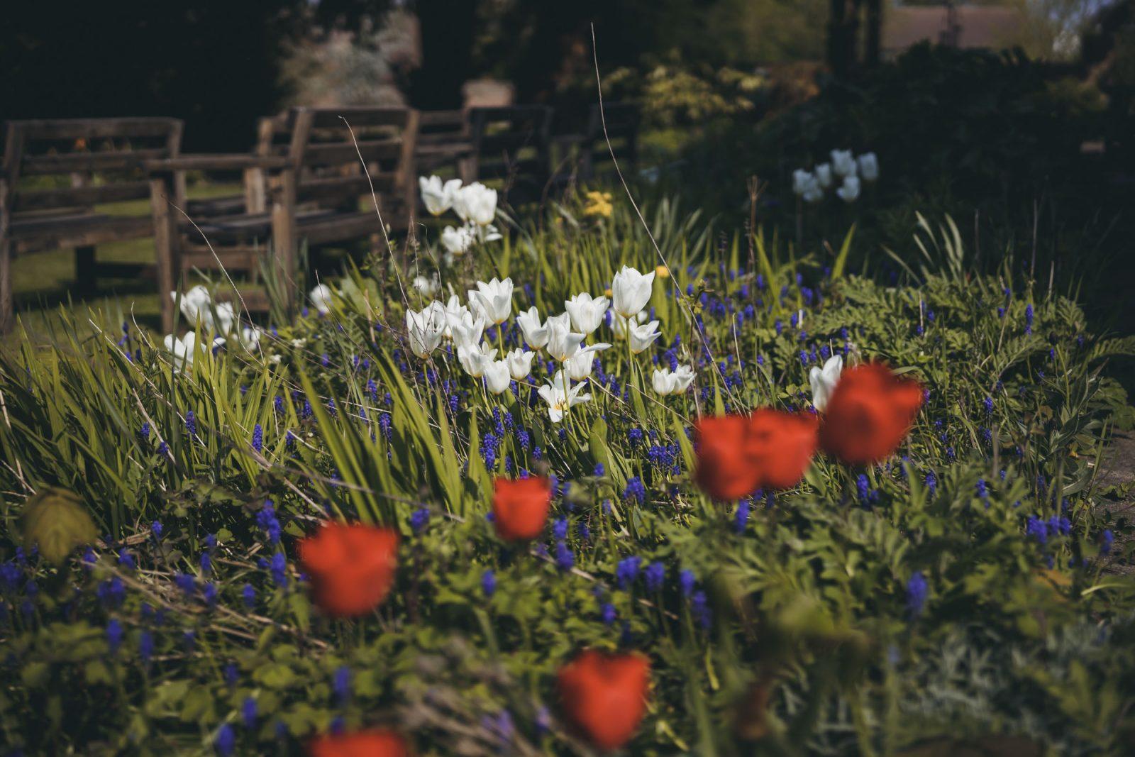 Quiet Days in the garden